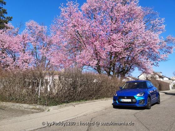 Swift Sport Kirschblüte